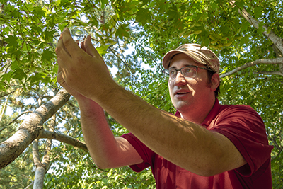 Joshua Milnes releases Samurai wasps in a tree.