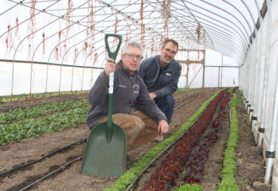 Jaeckel and Finch inspect young produce inside a greenhouse.