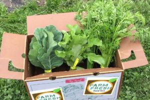 View of leafy greens inside a Farm Fresh Food Box.
