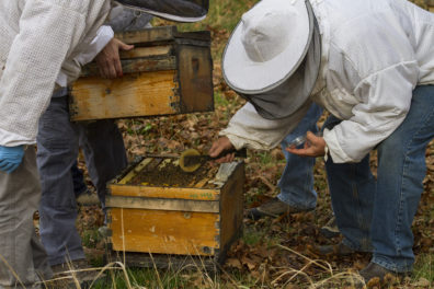 two researchers in bee suits apply mushroom mycellium to be hive