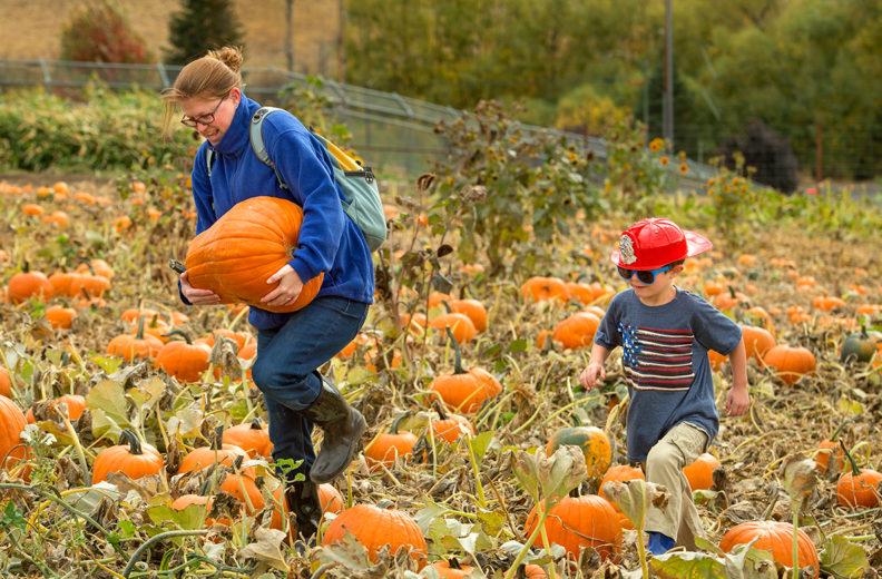 A mother and son carrying a pumpkin through a pumpkin patch.