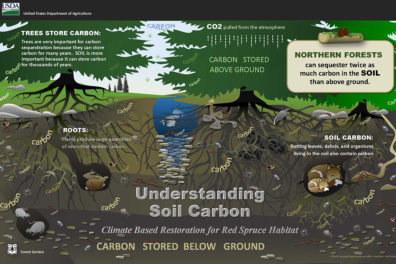 Diagram illustrating the storage of carbon in soil.