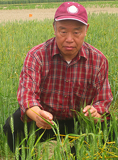 Chen, inspecting wheat in a field.