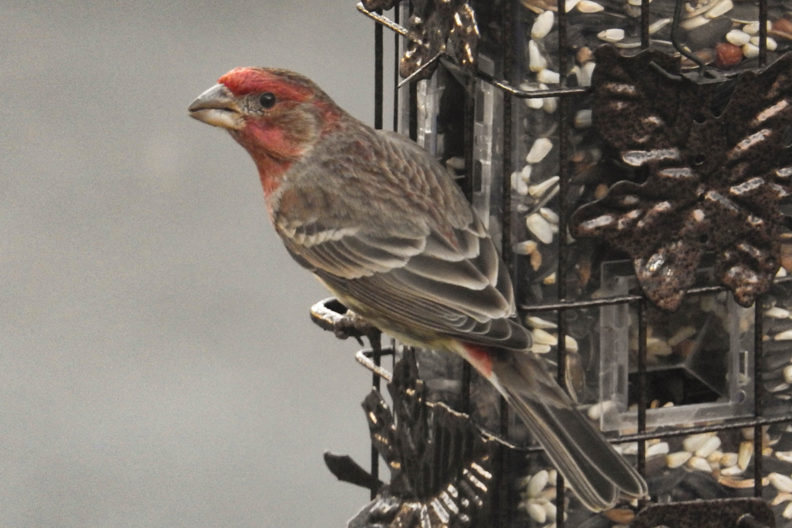 A finch sitting on a bird feeder.