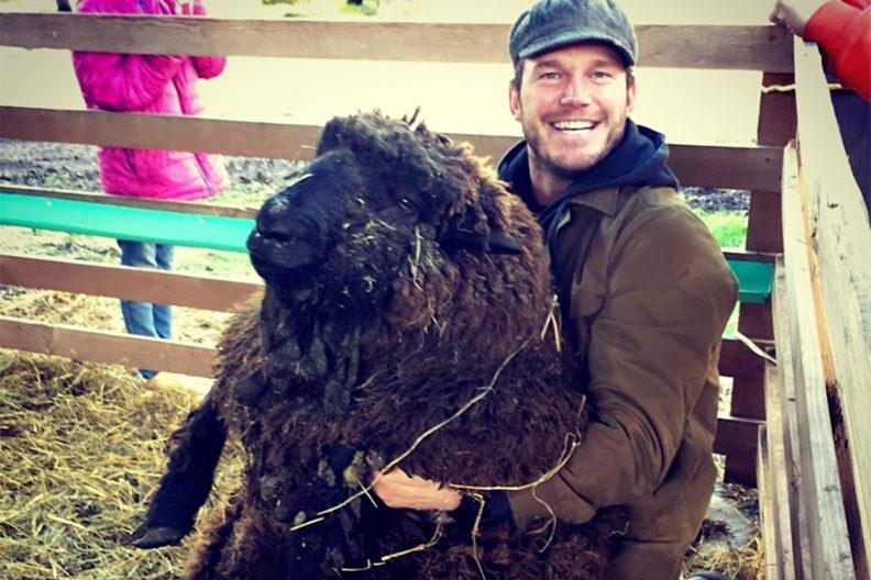 Chris Pratt and a sheep inside a livestock pen.