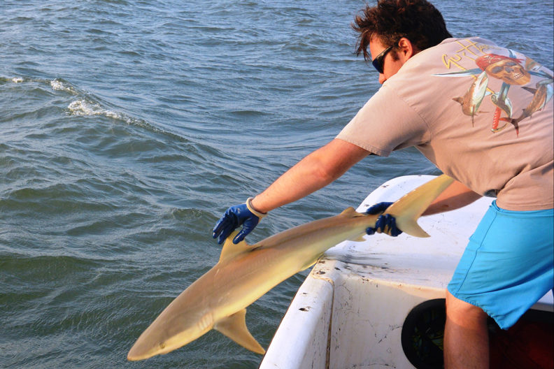 Bangley releasing a shark back into the ocean.