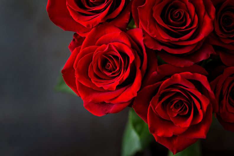 Closeup of a bouquet of red roses.