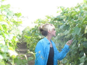Tarah Sullivan examines the leaves of concord grapevines for chlorosis.