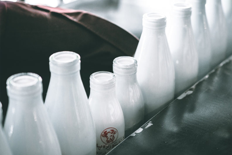 A row of milk bottles.