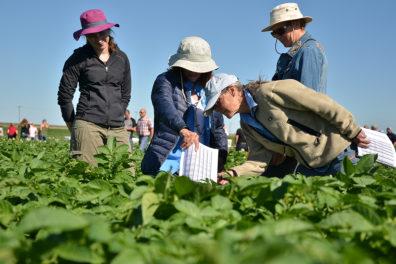 Visitors check out rows of potato crops at the WSU Othello research farm.