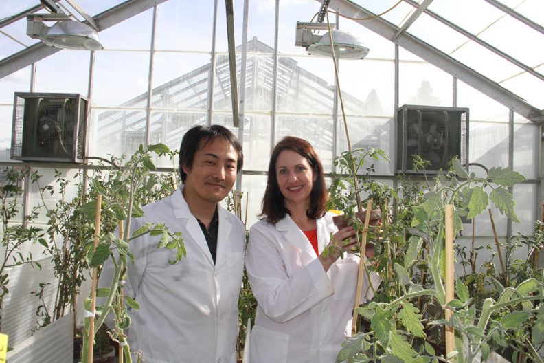 A photograph of Kiwamu Tanaka and Cynthia Gleason in a greenhouse with plants