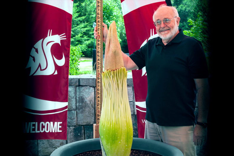 Closeup of Steve Sylvester and his corpse flower, Titan VanCoug.