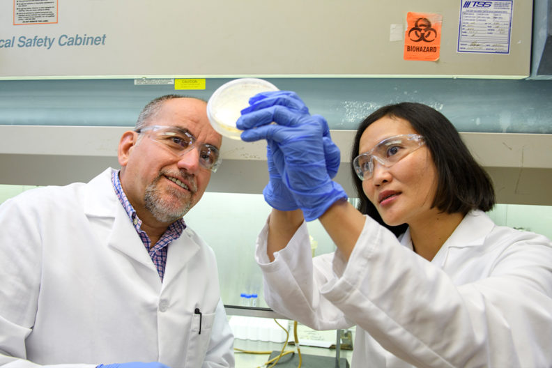 Two scientists look at a bacterial culture