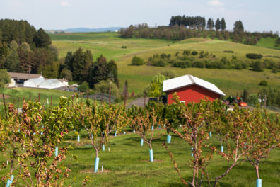 An orchard on the WSU Eggert Family Organic Farm.