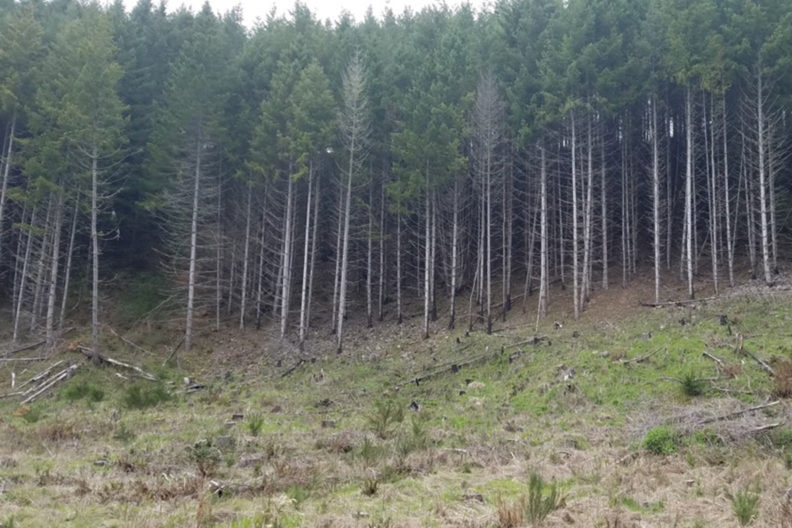 A photograph of the entrance to a forest with multiple trees.