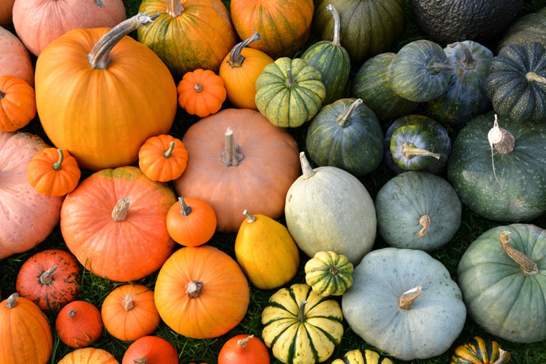 Closeup of a variety of pumpkins