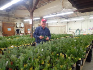 Gary Chastagner in a grow house for Christmas trees