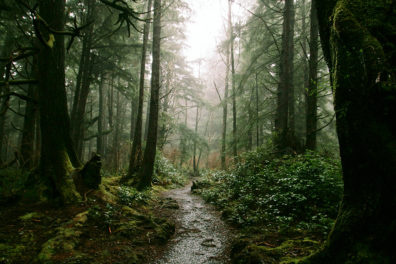 A muddy path through a forest near Forks, Washington.