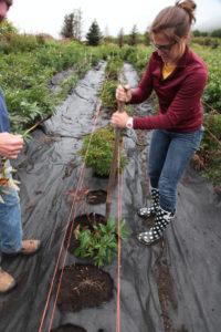 Garfinkel inspects peony plants on a Northwest farm.