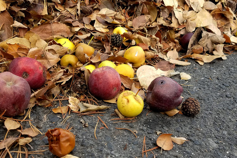 A pile of leaves, apples and other agricultural waste.