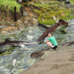 WSU biologist Joanna Kelley takes water samples from a stream