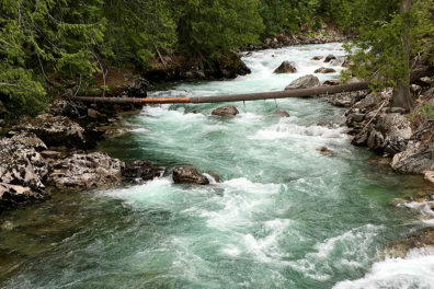 A fast-moving river in a forest.