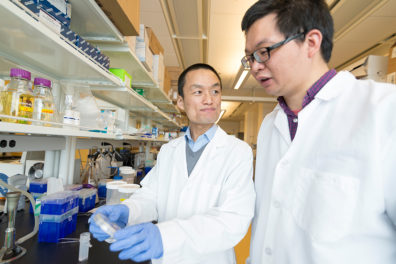 Senior author and assistant professor Zhaokang Cheng (left) discusses an experiment with first author and postdoctoral research fellow Peng Xia.