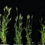 Model grasses used in a scientific experiment