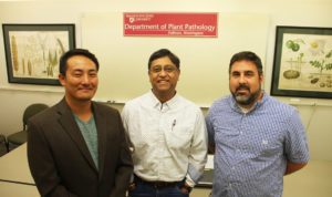 Studying an emerging and destructive complex of diseases in potato, including mop top virus and powdery scab, WSU plant pathologists Kiwamu Tanaka and Hanu Pappu, and computational biologist Stephen Ficklin, right, lead a new federally funded research project