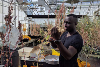 A student scientist working in a greenhouse with plants