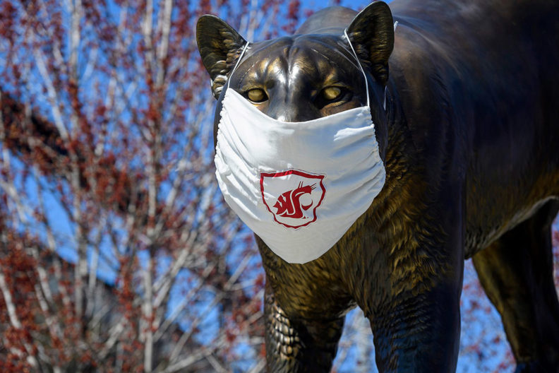 The Cougar Pride statue wearing a face mask with the WSU logo.
