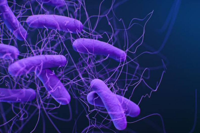 This is a medical illustration of Clostridioides difficile bacteria