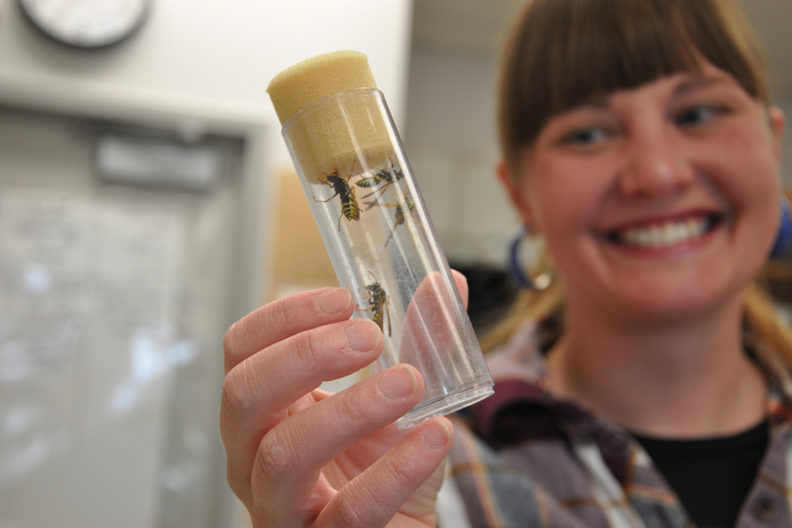 Megan Asche holds a vial containing paper wasps.
