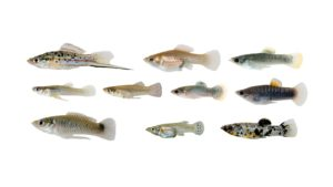 Ten small stream fish on a white background.