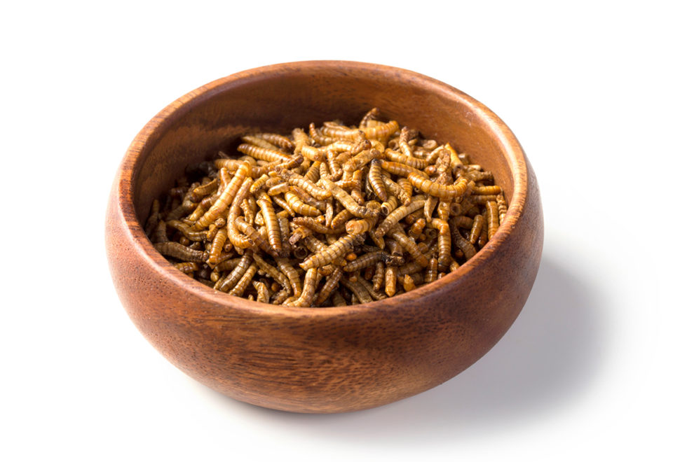 A bowl of meal worm larvae