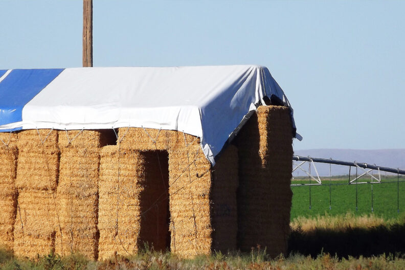 A stack of alfalfa hay