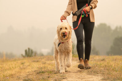 A woman walks her dog outside in the smoke.