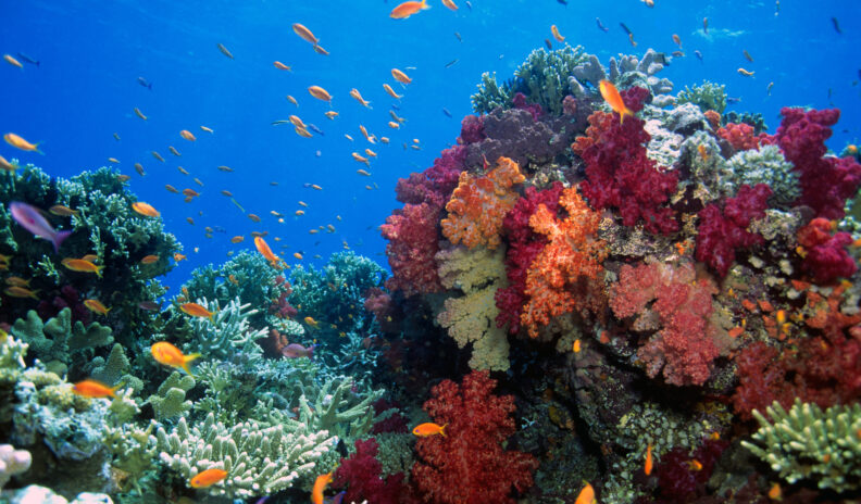 a coral reef with orange fish swimming in the background