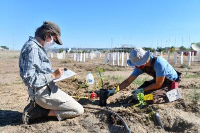 Students plant wine grape plants