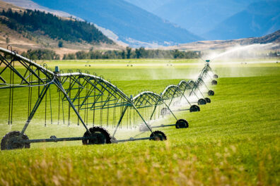 Sprinklers irrigating an agricultural field.