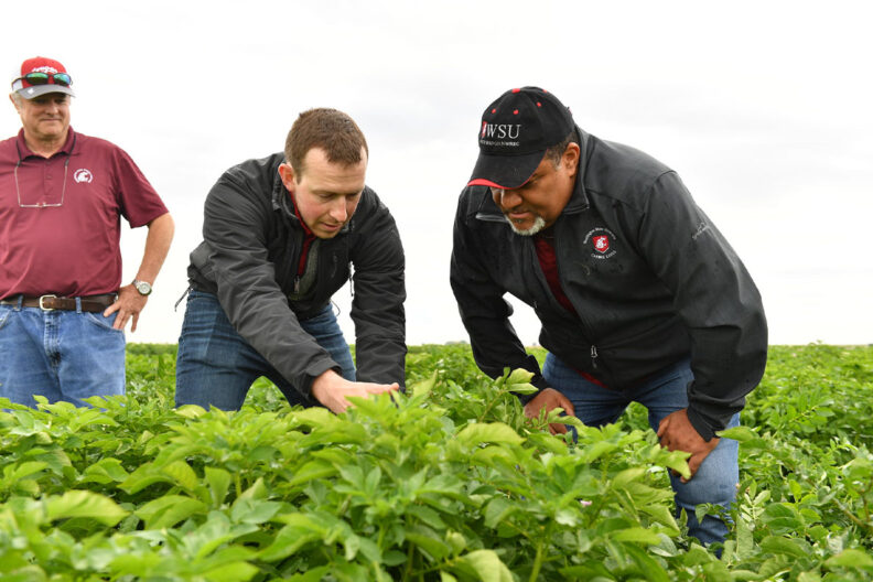 Faculty, students and college leadership look at potatoes in the field.