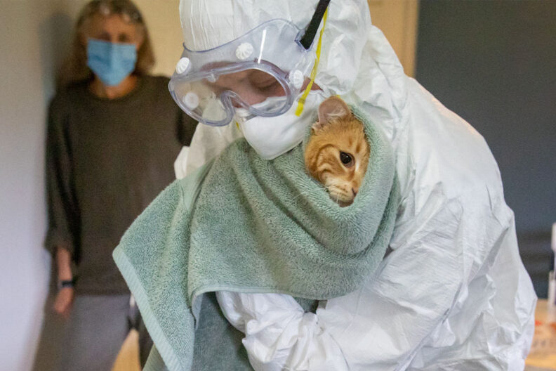 Dr. Katie Kuehl holds a cat while wearing protective gear.
