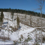 An area of clearcut forest in the Mica Creek watershed.