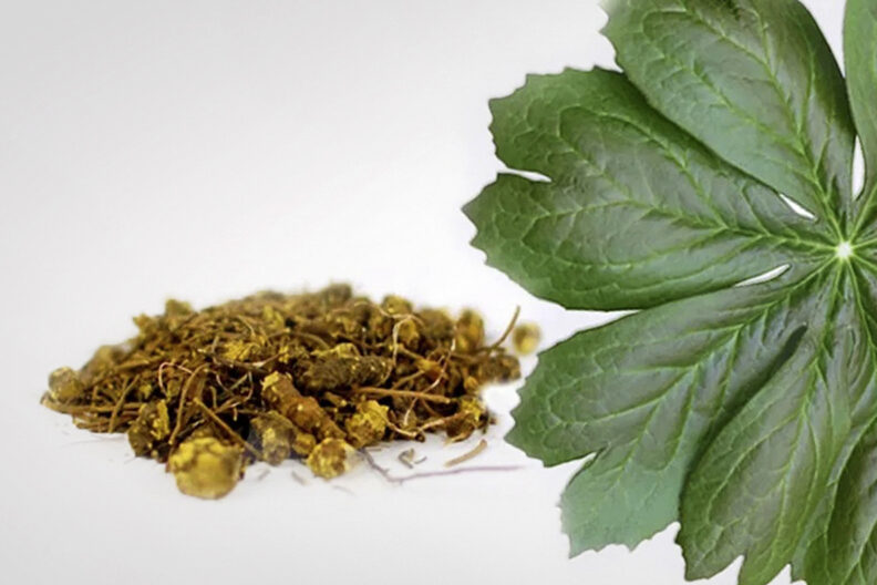 Goldenseal plant and roots.