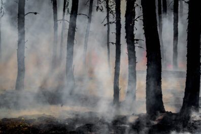 Smoke and flames from a forest fire.