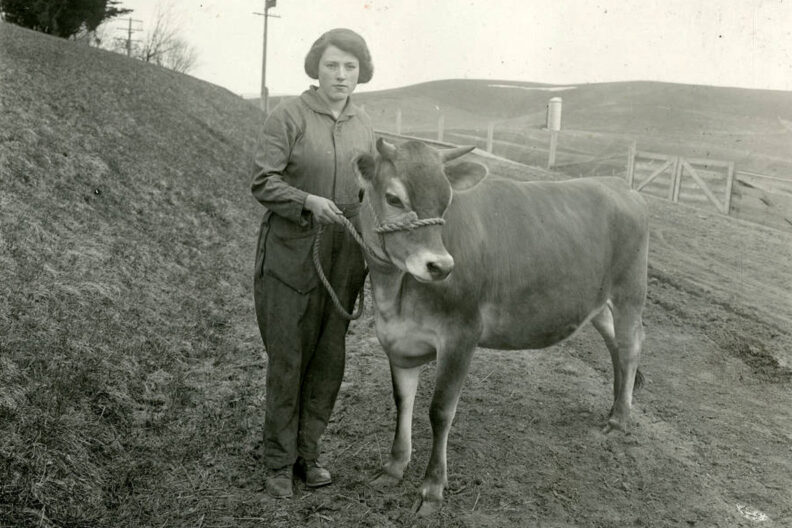 A young woman with a steer in the 1920s.