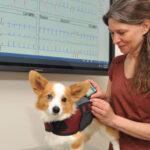 Dr. Lynne Nelson examines a small Corgi.