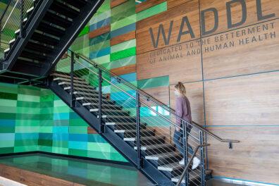 A woman climbing a staircase inside the Washington Animal Disease Diagnostic Laboratory.