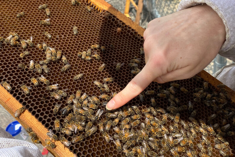 Closeup of a honeybee hive