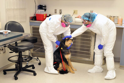 A dog is treated by Veterinary Teaching Hospital staff wearing protective gear
